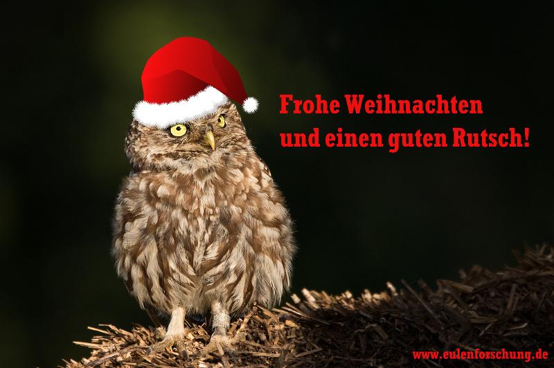 Frohe Weihnachten mit Steinkauz